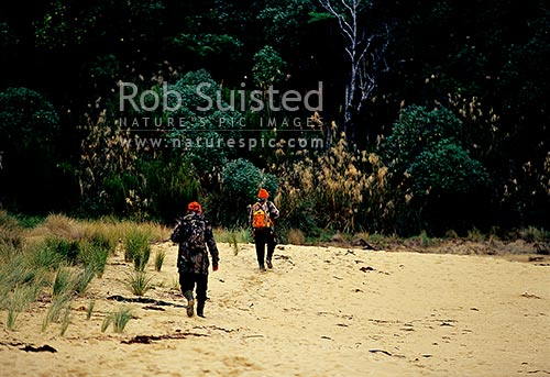 Two hunters heading out for a hunt wearing blaze orange high visibility clothing in dim lighting, Stewart Island, Southland District, Southland Region, New Zealand (NZ) stock photo.