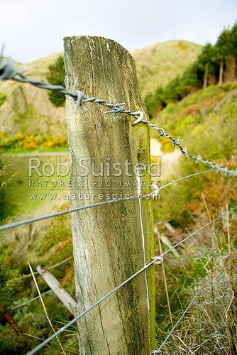 Old Farm Fence Strainer Post And Barbed Wire New Zealand