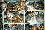 Turtle shells confiscated in trade