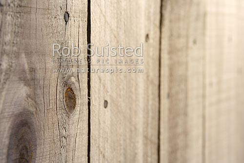Wooden fence palings - wood texture. Wood knots, New Zealand (NZ) stock photo.