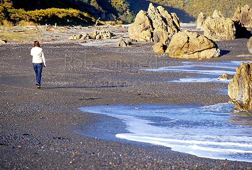 Walker on shingle beach south of Eastbourne enroute to Pencarrow Head, Eastbourne, Wellington City District, Wellington Region, New Zealand (NZ) stock photo.