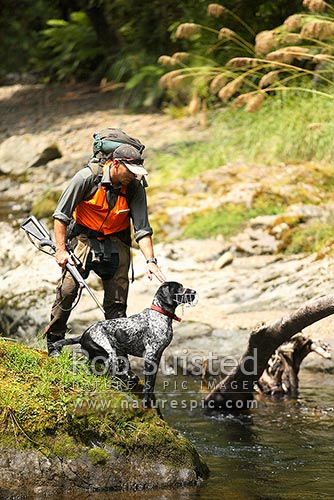 Andrew Glaser (Department of Conservation (DOC), Opotiki) and his Blue Duck (Hymenolaimus malacorhynchos) finding German short haired pointer dog, Neo. Te Waiiti River, Te Urewera National Park, Western Bay of Plenty District, Bay of Plenty Region, New Zealand (NZ) stock photo.