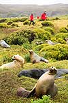 Subantarctic visitors