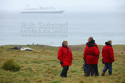 Tourist visitors to Enderby Island with New Zealand Sea lions (Phocartos hookeri) and MV Orion is background, Auckland Islands, NZ Sub Antarctic District, NZ Sub Antarctic Region, New Zealand (NZ) stock photo.