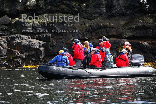 Tourist visitors in zodiac boat at Enderby Island, Auckland Islands, NZ Sub Antarctic District, NZ Sub Antarctic Region, New Zealand (NZ) stock photo.