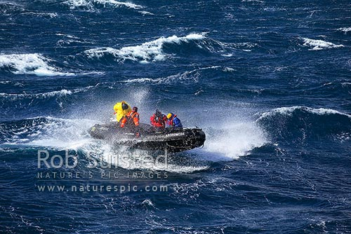 People in zodiac boat in heavy windswept seas crashing through waves, Auckland Islands, NZ Sub Antarctic District, NZ Sub Antarctic Region, New Zealand (NZ) stock photo.