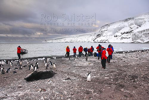 Tourist visitors landing by Zodiac on icy shores of Franklin Island, Adelie penguin rookery (Pygoscelis adeliae) and Weddell seals (Leptonychotes weddellii), Ross Sea, Antarctica District, Antarctica Region, Antarctica stock photo.