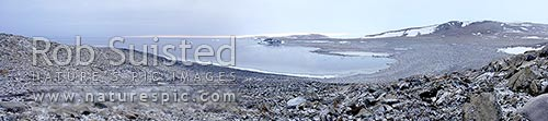 Panorama from Inexpressible Island. Site of Victor Campbell's historic 1912 terra Nova Northern Party survival ice cave far right. Evan's Cove, Terra Nova Bay. Large Panorama, Ross Sea, Antarctica Region, Antarctica stock photo.