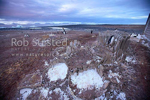 Remains of supply barrels outside Borchgrevink's historic 1899 Southern Cross Expedition huts on Ridley Beach, Cape Adare, Ross Sea, Antarctica District, Antarctica Region, Antarctica stock photo.