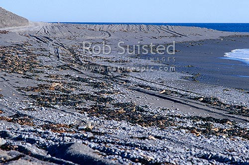 Four wheel drive tracks across beach sand and sand dunes, Wellington South Coast. 4WD, Wellington, Wellington City District, Wellington Region, New Zealand (NZ) stock photo.