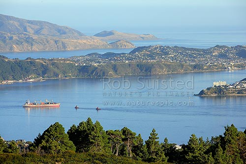 Large container ship and tugs, tugboats, in Wellington Harbour. Miramar Peninsula and Wellington Harbour Entrance beyond, Wellington, Wellington City District, Wellington Region, New Zealand (NZ) stock photo.