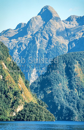 Steep cliffs of Doubtful Sound showing tree avalanches and slips. Beech forest (Nothofagus sp.), Fiordland National Park, Southland District, Southland Region, New Zealand (NZ) stock photo.