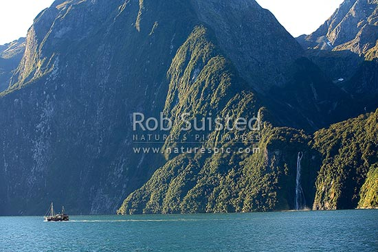 Real Journeys vessel the Milford Wanderer in front of Stirling Falls (146m) entering Milford Sound from a classic 'hanging valley', Fiordland National Park, Southland District, Southland Region, New Zealand (NZ) stock photo.