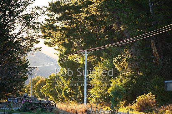 Power lines running through an evening sunlit country road, Athol, Southland District, Southland Region, New Zealand (NZ) stock photo.