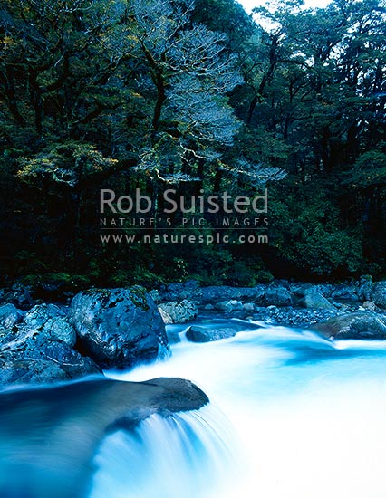 Hollyford River rapids, Fiordland National Park, Fiordland National Park, Southland District, Southland Region, New Zealand (NZ) stock photo.