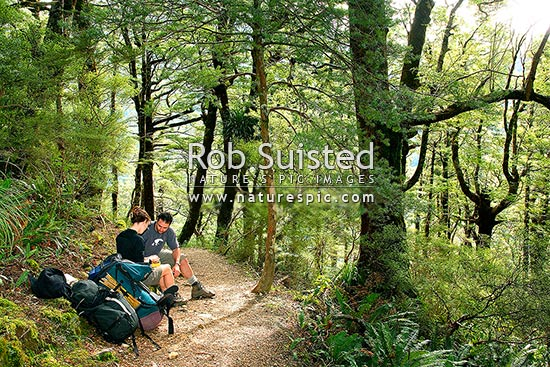 Trampers having a lunch stop on a tramping track to Sunrise Hut. Hiking food stop, Ruahine Forest Park, Central Hawke's Bay District, Hawke's Bay Region, New Zealand (NZ) stock photo.