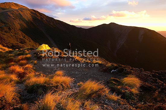 Tramper enjoying the dramatic sunrise in the Ruahine Range. Alpine tent camping in the tussock tops, Ruahine Forest Park, Central Hawke's Bay District, Hawke's Bay Region, New Zealand (NZ) stock photo.