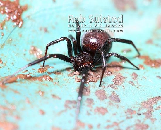 Spider bites | Ministry of Health NZ
