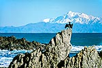 Cook Strait and Kaikouras