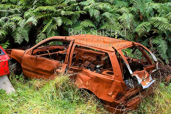 Car wrecks of stolen vehicles abandoned on a remote forest road track. Gun shot holes and fire damaged. Environmental rubbish, Akatawara Valley, New Zealand (NZ) stock photo.