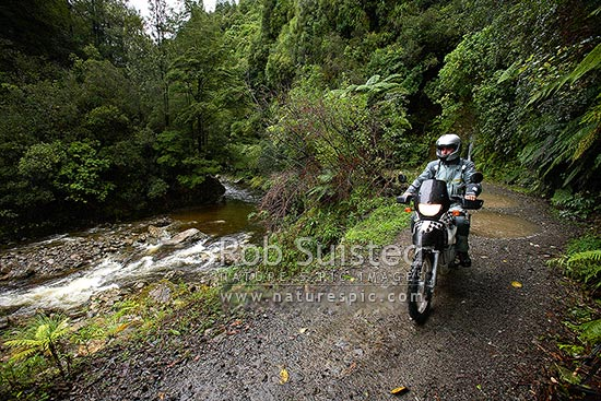 Dirt road enduro motorcycle riding through native forest river valley. BMW F650Gs Dakar, Akatawara Valley, Upper Hutt City District, Wellington Region, New Zealand (NZ) stock photo.