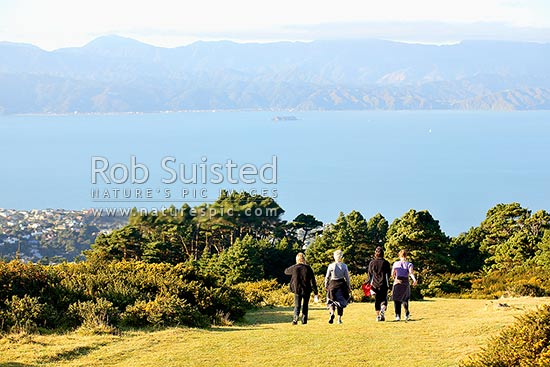 A group of four woman exercising by hill walking above Wellington Harbour on calm morning, Khandallah, Wellington City District, Wellington Region, New Zealand (NZ) stock photo.