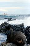 Fur seal and fishing boat