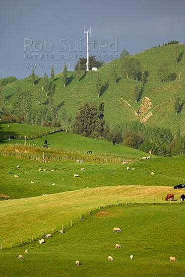 Mobile phone cell site transmitter tower on hill in farmland. Rural communications above sheep and cattle, Taihape, Rangitikei District, Manawatu-Wanganui Region, New Zealand (NZ) stock photo.