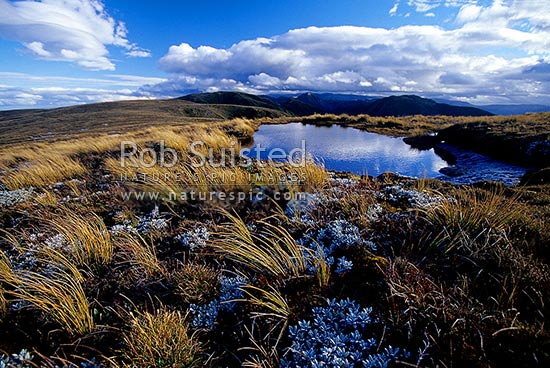 Clearing storm reflected in alpine tarn on tussock tops of the Main Range, Ruahine Forest Park, Rangitikei District, New Zealand (NZ) stock photo.
