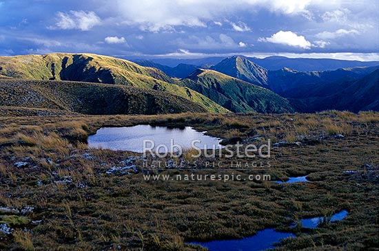 Clearing storm reflected in alpine tarn on tussock tops of the Main Range. Mount (Mt) Tupari left and Mount (Mt) Remutupo centre right, Ruahine Forest Park, Rangitikei District, New Zealand (NZ) stock photo.