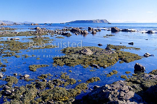 Mana Island beyond coastal rock pools and seaweed on coast near Plimmerton. South Island visible in distance, Plimmerton, Porirua City District, Wellington Region, New Zealand (NZ) stock photo.