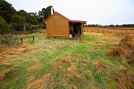 Ruahine Corner hut amongst red tussock (Chionochloa rubra) on bushedge, Ruahine Forest Park, Rangitikei District, Manawatu-Wanganui Region, New Zealand (NZ) stock photo.