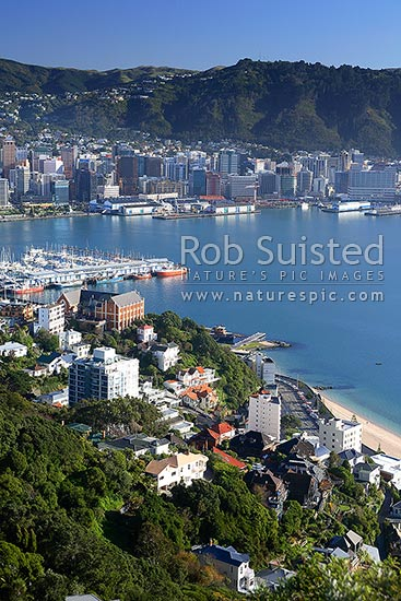 Wellington City CBD, Chaffers Marina, Te Papa, harbour, overseas terminal, Saint St Gerard's Monastery, from Mount Victoria, Wellington, Wellington City District, Wellington Region, New Zealand (NZ) stock photo.