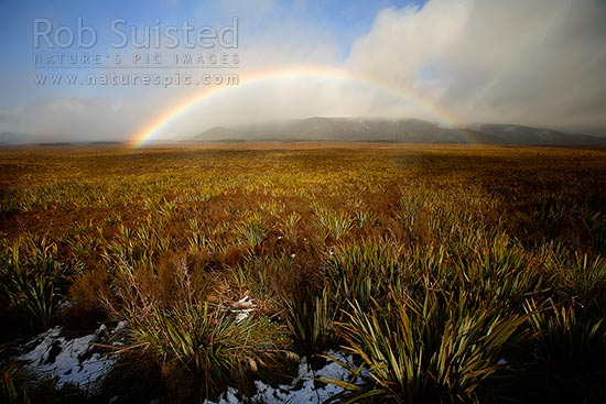 Winter rainbow over the Mahuia wetland flax swamp. Tongariro National Park. Mount (Mt) Ruapehu in cloud, National Park, Ruapehu District, Manawatu-Wanganui Region, New Zealand (NZ) stock photo.