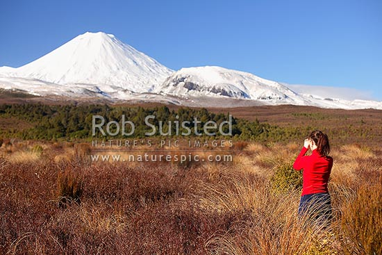 Visitor amongst red tussock, photographing snowy Mount (Mt) Ngauruhoe (2287masl) and Pukekaikiore (right) from the west. Winter, Taurewa, Ruapehu District, Manawatu-Wanganui Region, New Zealand (NZ) stock photo.