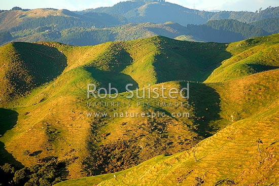 Rolling farmland and hills, Paekakariki, Kapiti Coast District, New Zealand (NZ) stock photo.