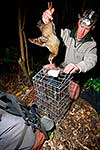 Releasing weka from cage trap