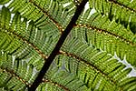 Closeup tree fern fronds pattern