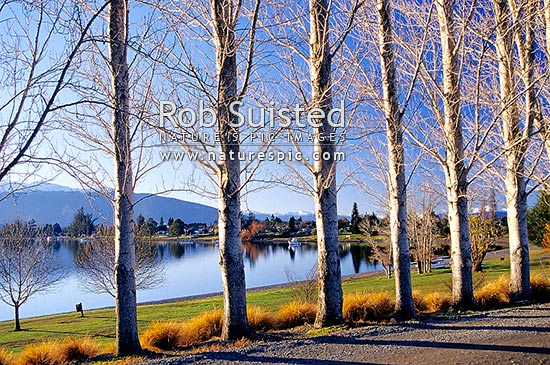 Lake Te Anau and Te Anau township on a calm late winter sunny evening. Viewed through a row of trees, Te Anau, Southland District, Southland Region, New Zealand (NZ) stock photo.