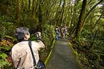 Tourist with video,Fiordland bush