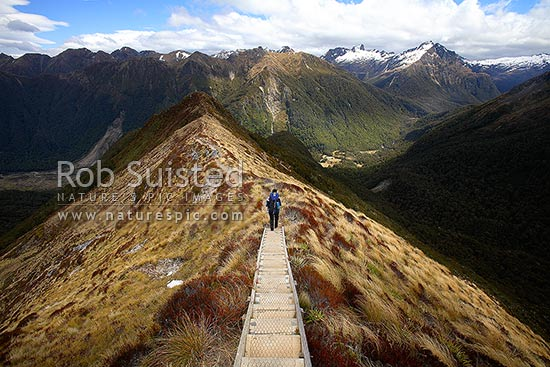 Tramper / hiker on the Kepler Track Great Walk, descending down ridge to the Iris Burn Hut in clearing beyond. Snow on mountain tops in distance, Fiordland National Park, Southland District, Southland Region, New Zealand (NZ) stock photo.