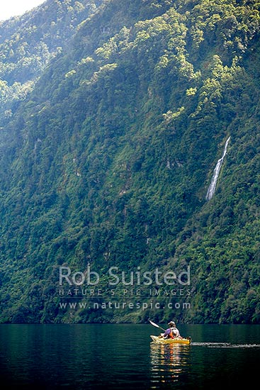 Sea kayaking in a tranquil Doubtful Sd, rainforest cliffs and waterfall behind. Fiordland National Park, Doubtful Sound, Fiordland, Southland District, Southland Region, New Zealand (NZ) stock photo.