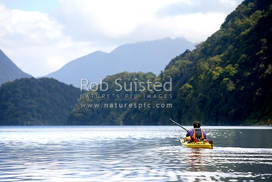 Sea kayaking in a tranquil, Doubtful Sd, Deep Cove, Fiordland National Park, Doubtful Sound, Fiordland, Southland District, Southland Region, New Zealand (NZ) stock photo.