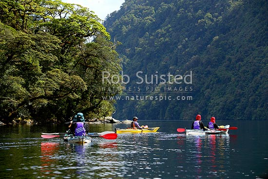 Wilderness sea kayaking in a tranquil, Doubtful Sd, Deep Cove, Fiordland National Park, Doubtful Sound, Fiordland, Southland District, Southland Region, New Zealand (NZ) stock photo.