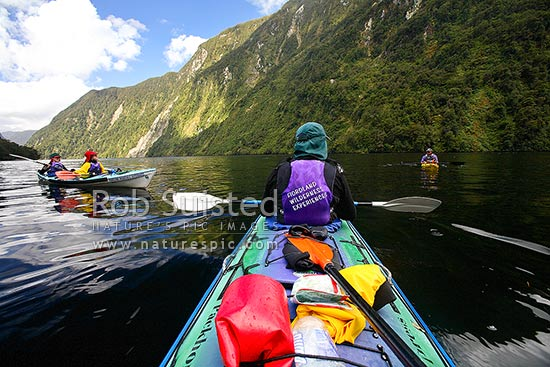 Wilderness sea kayaking in Hall Arm of Doubtful Sound. Fiordland National Park. Double boats, Doubtful Sound, Fiordland, Southland District, Southland Region, New Zealand (NZ) stock photo.
