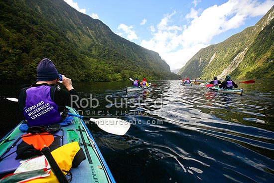 Wilderness sea kayaking in Hall Arm of Doubtful Sd. Fiordland National Park. Double boats. Person in foreground is taking a photograph, Doubtful Sound, Fiordland, Southland District, Southland Region, New Zealand (NZ) stock photo.
