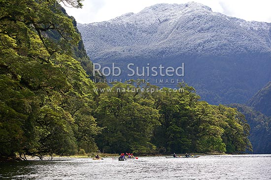 Wilderness sea kayaking trip in Doubtful Sd, Fiordland National Park. Fresh dusting of snow on mountains, Doubtful Sound, Fiordland, Southland District, Southland Region, New Zealand (NZ) stock photo.
