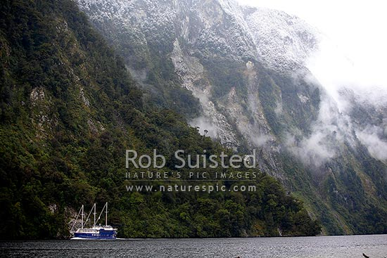 Real Journeys vessel Fiordland Navigator in Hall Arm of Doubtful Sd on a moody morning with cloud and fresh dusting of snow, Doubtful Sound, Fiordland, Southland District, Southland Region, New Zealand (NZ) stock photo.