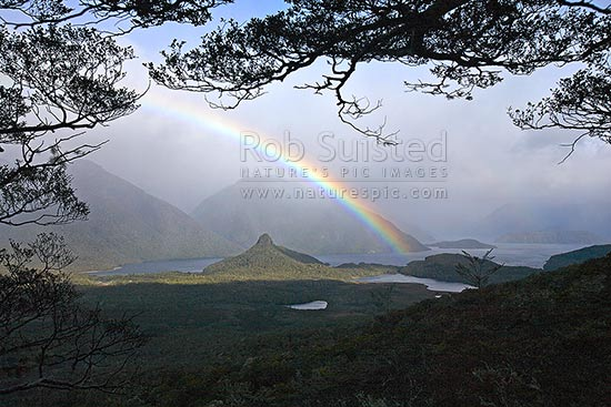 Moody rainbow under beech tree branches in Back Valley. The Monument (466m) centre left, Hope Arm of Lake Manapouri beyond, Fiordland National Park, Southland District, Southland Region, New Zealand (NZ) stock photo.