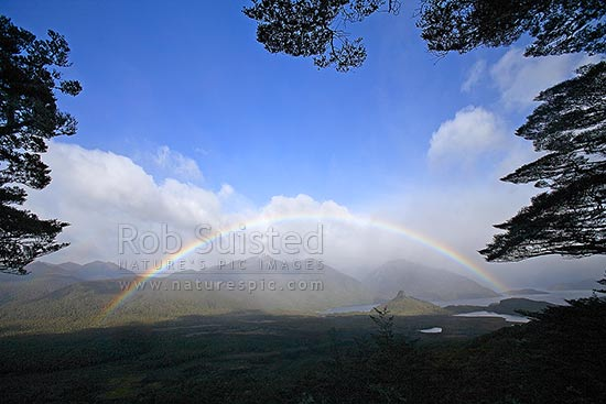 Moody full arch rainbow under beech tree branches in Back Valley. Hope Arm of Lake Manapouri beyond, Fiordland National Park, Southland District, Southland Region, New Zealand (NZ) stock photo.